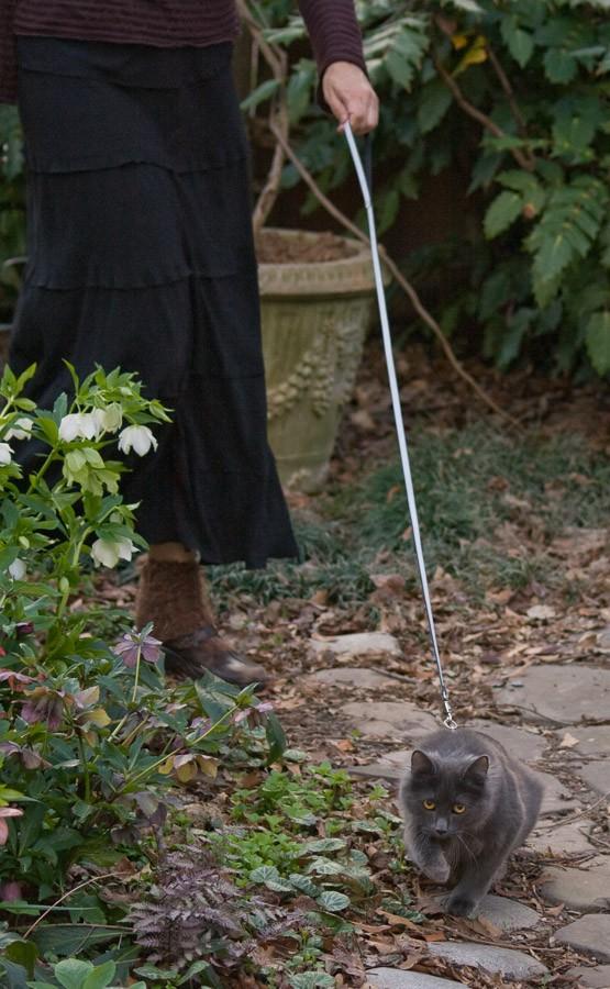 robin taking darla kitty for a walk
