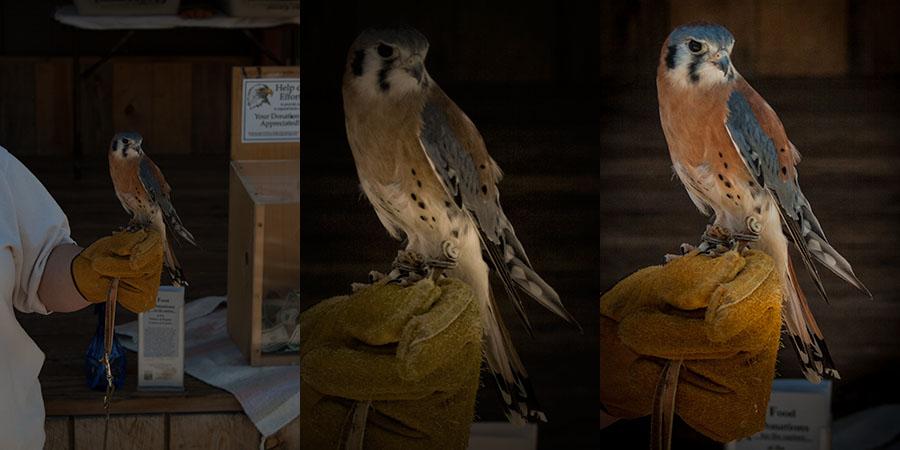 royal gorge falconry 3 edits results